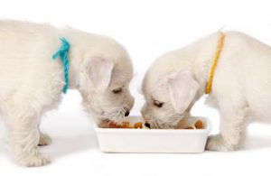 foods to make sure your dog does not eat