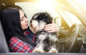 How to Ensure Safety when Driving with a Dog
