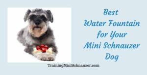 Best Water Fountain for Your Dog