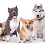 How to Help a Shelter Dog of Your Choice