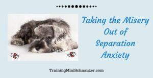 Takind the Misery Out of Separation Anxiety in Dogs