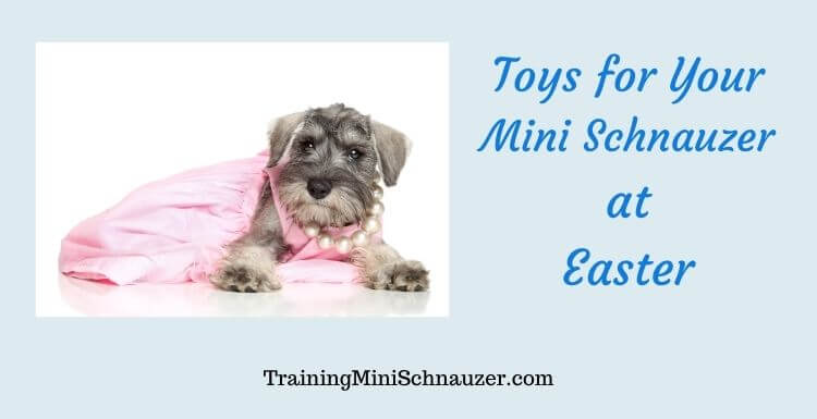 Toys for Your Mini Schnauzer at Easter