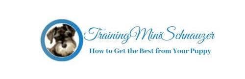 Training Miniature Schnauzers
